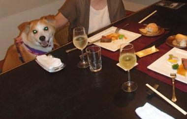 食事中、横でオスワリ