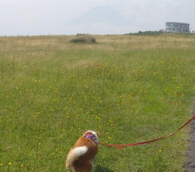 草原の中を歩く