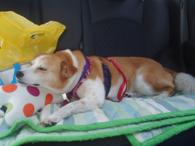 車の中で、枕に顎を乗せ爆睡中
