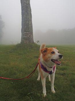 霧の中に立つひな