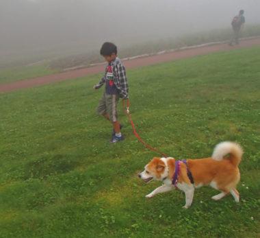 甥っ子と一緒に歩く