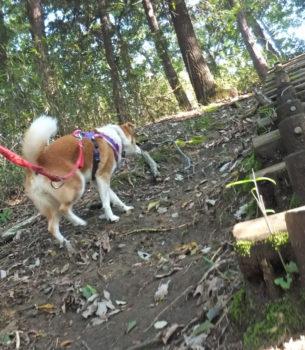 坂道を登る