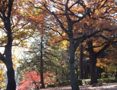 公園の木々