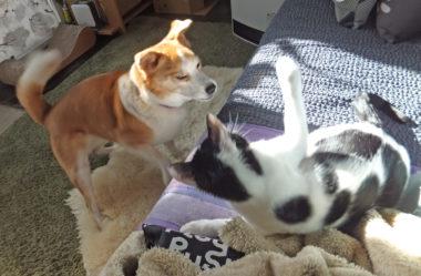 ソファの上から猫パンチ炸裂