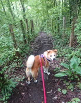 林の中を笑顔で散歩