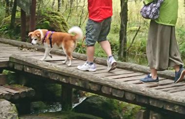 森林の中を散歩中