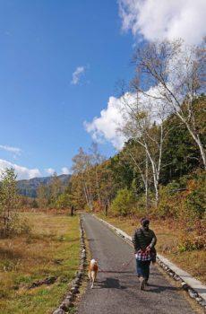 青空と紅葉の中を散歩