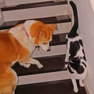 階段ですれ違う猫とひな