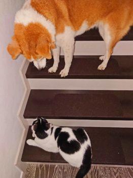 上から猫を見下ろすひな