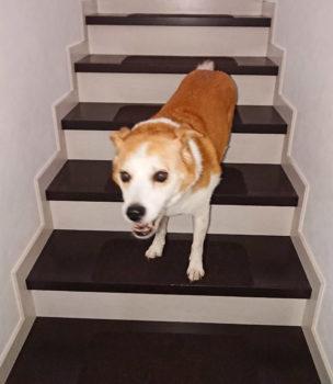 階段上で笑顔