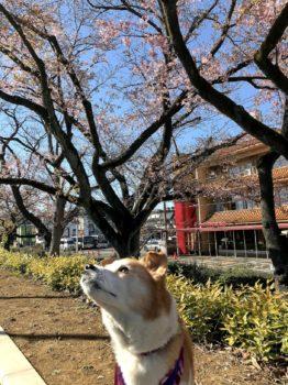 桜と記念撮影