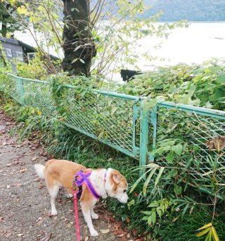 湖畔を散歩中