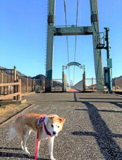 吊り橋とひな