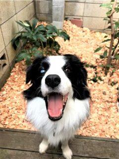 庭をバックに笑顔のレア