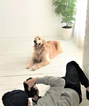 カメラマンとゴールデン