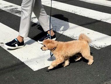 横断歩道を渡るmix