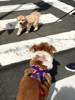 横断歩道でひなを見るmix