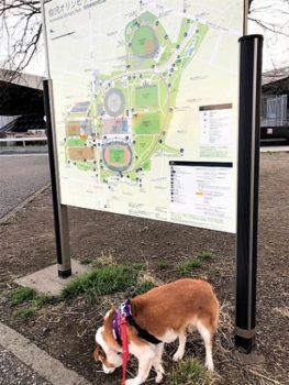 公園地図とひな