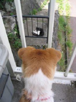 ベランダから野良猫を見るひな