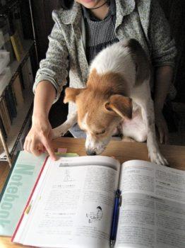一緒に本を読むひな