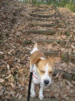 落ち葉の中を散策中