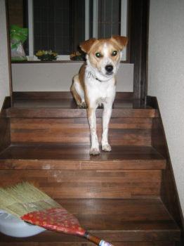 階段でオスワリ
