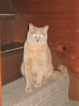 階段上の猫