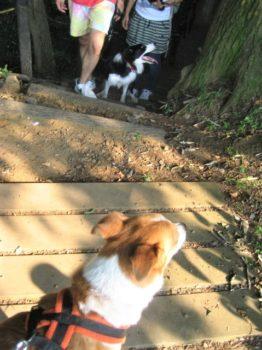 階段を登ってくるボーダー
