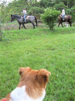 乗馬している人を見るひな