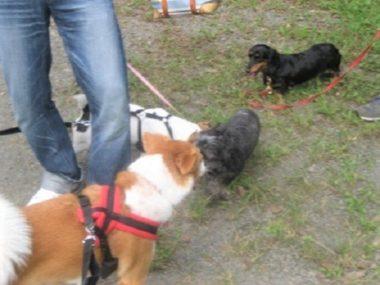 4頭の犬たち
