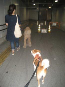 トンネル内を歩くスタンプーとひな