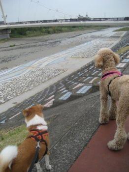 川沿いを歩くひなとスタンプー