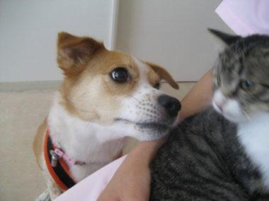 猫を見つめるひな