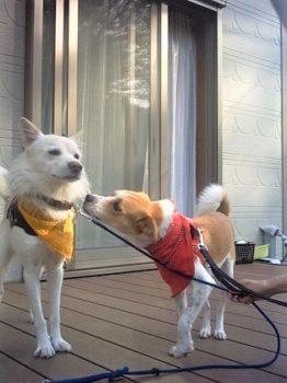 ひなと彼氏犬