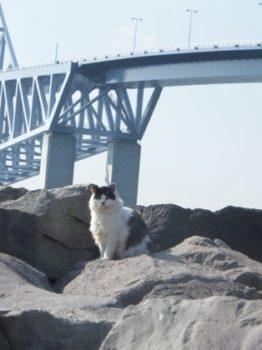 ゲートブリッジと野良猫