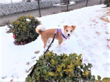 雪の上に立つひな