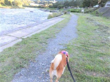 川沿いを散歩中