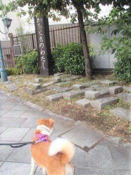 勝鬨橋付近を散歩中