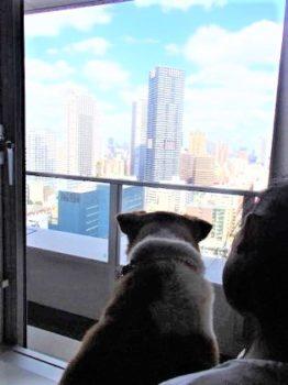 窓の外を眺めるひな