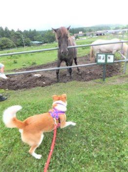 馬に脅かされて焦るひな