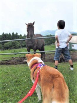 馬と見つめ合うひな