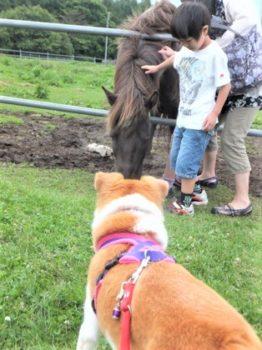 馬を警戒中のひな