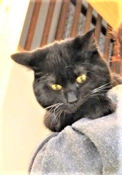 下を見る黒猫