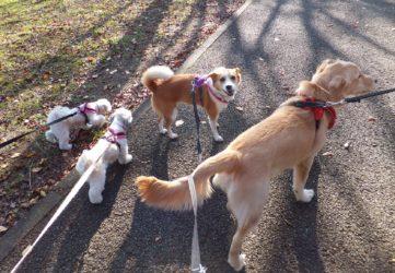 ひなと3頭の犬たち