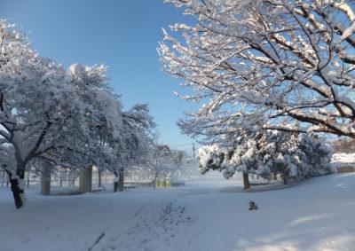 真っ白になった公園