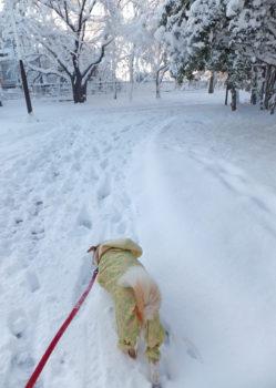 雪が積もったの公園内を歩く