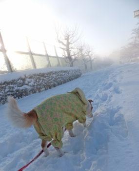 朝日を浴びながら雪の中を歩く