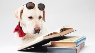 本を読むラブ