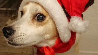Happy Christmas 🎄