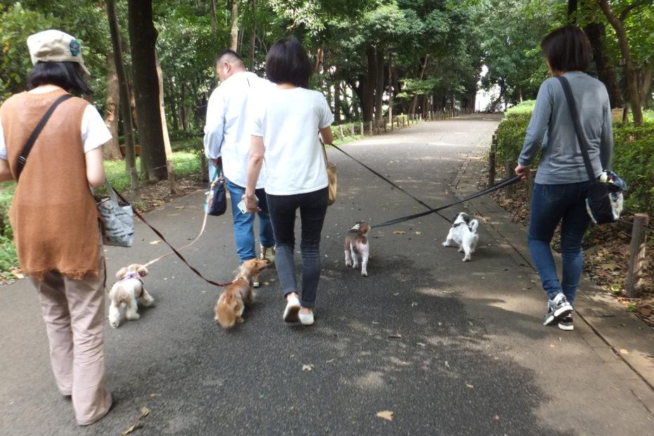4頭まとまって散歩中